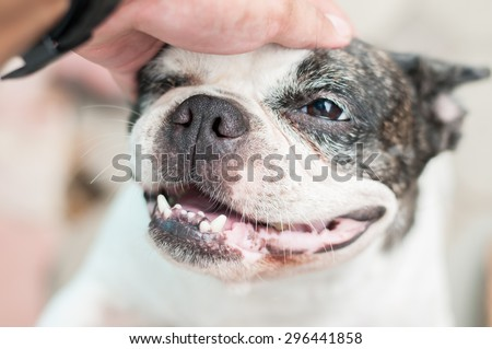 close up dog nose - stock photo