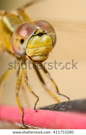 close up, dragonfly portrait of just the head and the big eyes