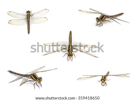 close up dragonfly set isolated on white background - stock photo