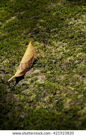 Close-up dried brown leaf on moss soil in forest - stock photo