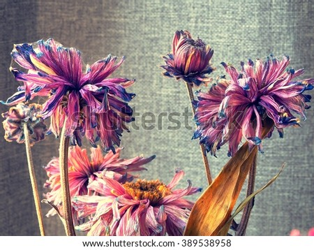 Close up dry flower - stock photo