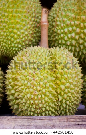 Close up Durian Mon Thong one fruits in Thailand market for sell - stock photo