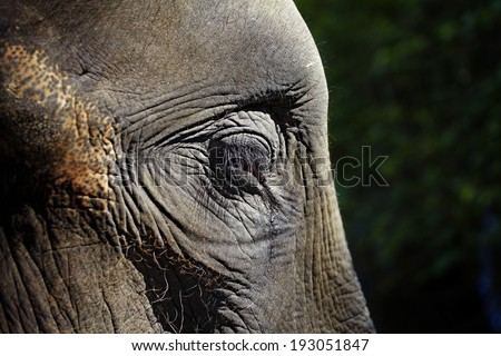 close up elephant eye in sun light