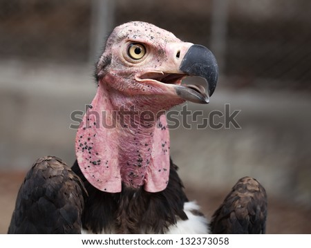 Close-up face looks vulture. - stock photo
