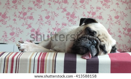 Close up face of Cute pug puppy dog sleeping rest lay down lie on bed with tongue out - stock photo