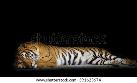 close up face tiger isolated on black background. - stock photo