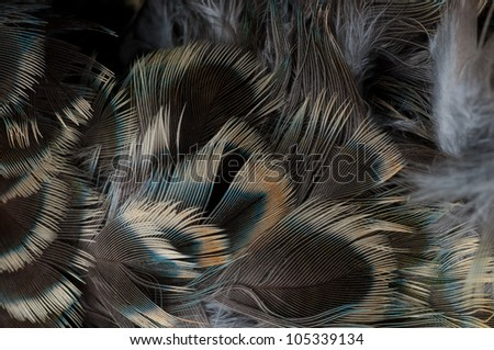 Close up feathers - stock photo