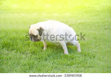 how to stop a dog peeing on grass