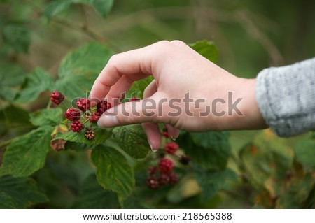 Close up female hand picking red berries in the forest - stock photo