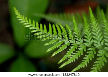 close-up fern leaf