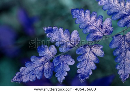 close-up fern leaf - stock photo