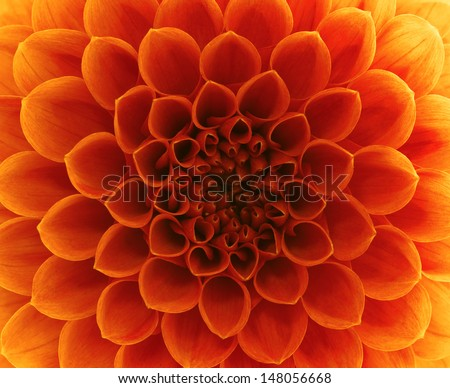 close-up flower  - stock photo