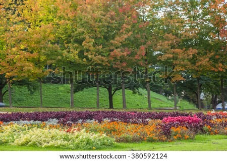 Close up flower field with autumn tree background - stock photo