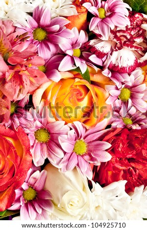 Close up flowers - stock photo