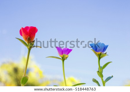flower awesome stock images, royaltyfree images  vectors, Beautiful flower