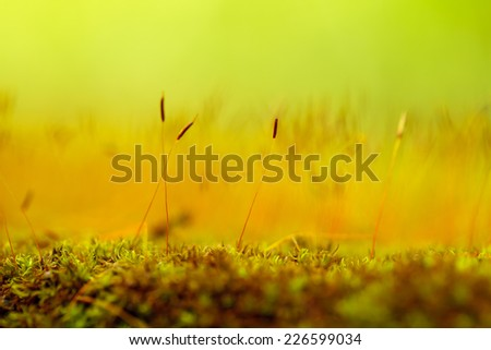 Close up flowers of the moss. - stock photo