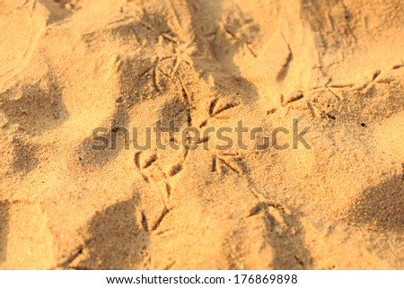 Close up footprints of a bird on the beach - stock photo