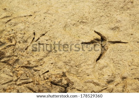 Close up footprints of a bird on the mud - stock photo
