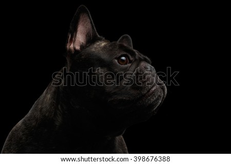 Close-up French Bulldog Dog like Monster in Profile view Isolated on black background - stock photo