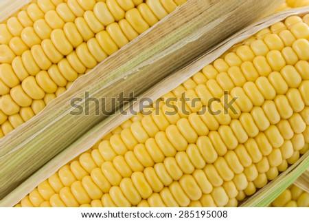close up fresh corn cobs - stock photo