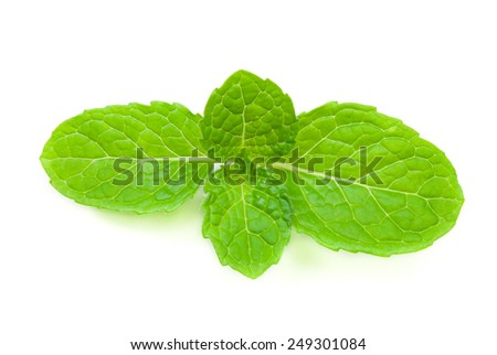 close up fresh mint Isolated on white Background.