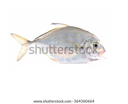 Close up fresh silver fish  - stock photo