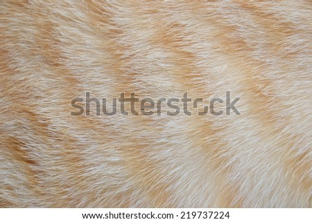 close up fur of cat being an allergen - stock photo