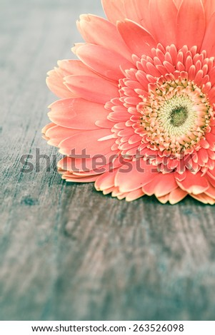 Close up Gerbera on wooden table, vintage look - stock photo