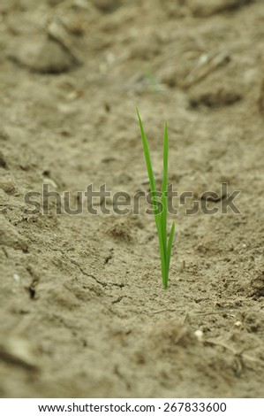Close up grass with texture of dry soil. - stock photo