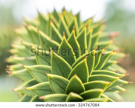 Close up green agave leaves close up - stock photo