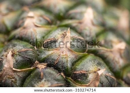 Close up green and ripe pineapple with leafs for fruit tropical fruit background
