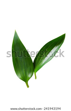 Close up green leaf isolated on white. Ecology and care concept - stock photo