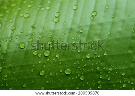 Close up green leaf with raindrops cover - stock photo