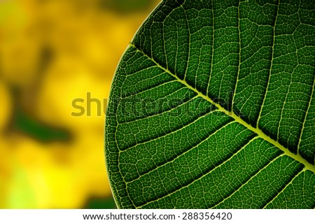 Close up green leaf with yellow color background.