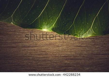 Close up Green leaves on wood background , vintage tone - stock photo