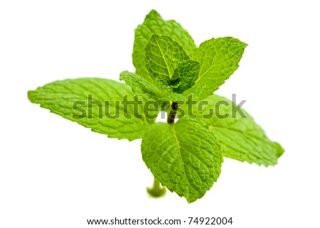 Close up green mint isolated on white background - stock photo