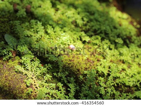 close up green moss background in the sunlight