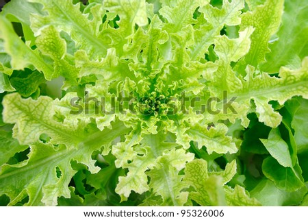 close up green vegetable