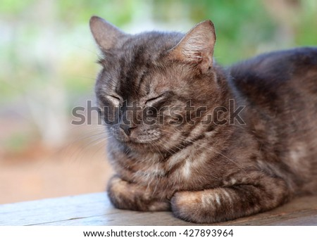 Close up grey cat sleep - stock photo
