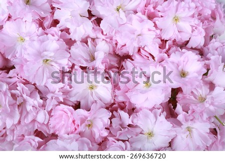 close up group of bright cerise pink flowers - stock photo