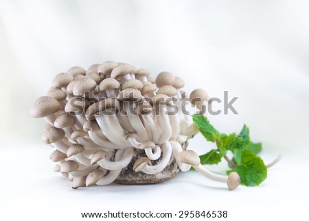 Close up group of Brown Mushroom