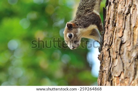 Close up half the squirrel chipmunk perched on a small tree native to tropical forests . - stock photo