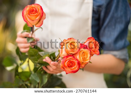 Close-up. Hands female florist holding a roses. - stock photo