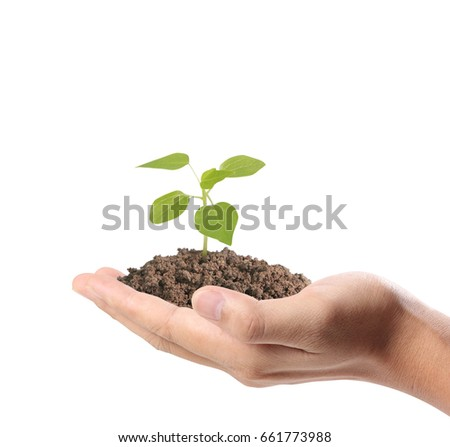 Close up  hands holding a plant