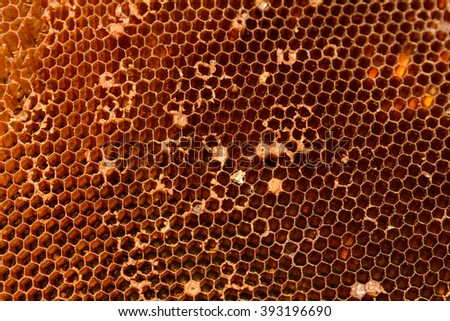 Close up honeycomb, hive, beehive