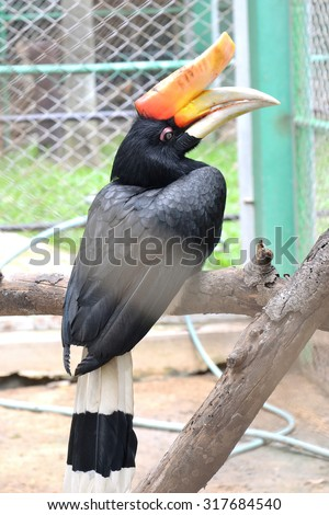 close up hornbill in cage - stock photo