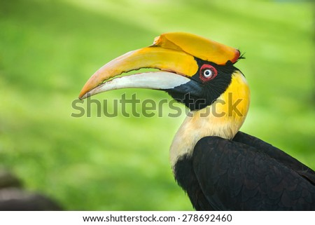 Close-up hornbills - stock photo