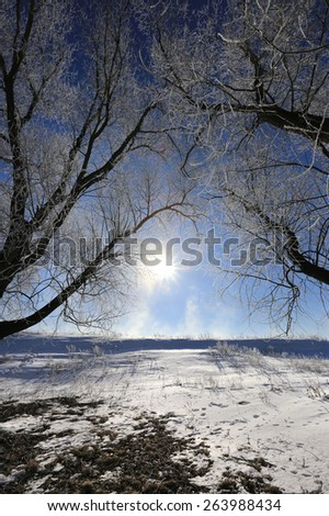 close-up icy tree branches against the blue sky and rising sun in the winter - stock photo