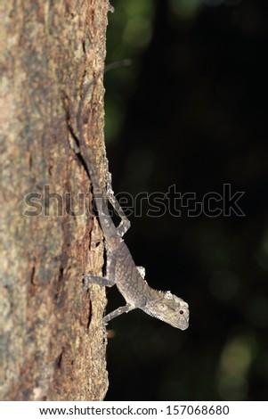 Close up iguana in the jungle Thailand - stock photo