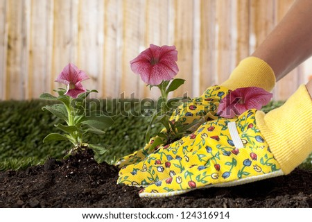 Close-up image of a gardener's hand planting flowering plants - stock photo